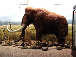 290px-Mammoth-ZOO.Dvur.Kralove