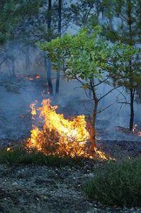 220px-Waldbrand-Bodenfeuer